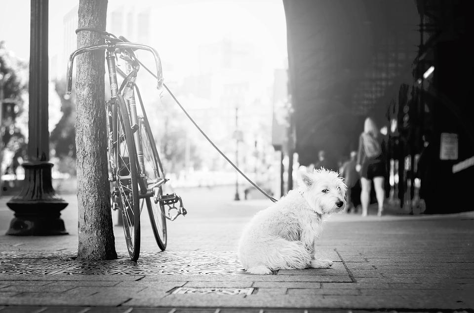 kutyapóráz-pic1
